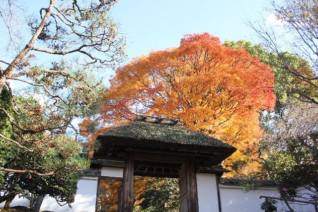 京都にある脳血管障害にご利益がある神社【安楽寺】